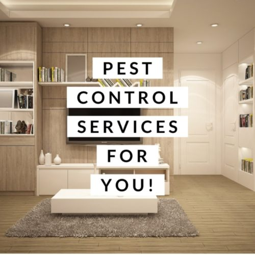 Featured Business | Elite Home Pest Services | Skiatook Pest Control