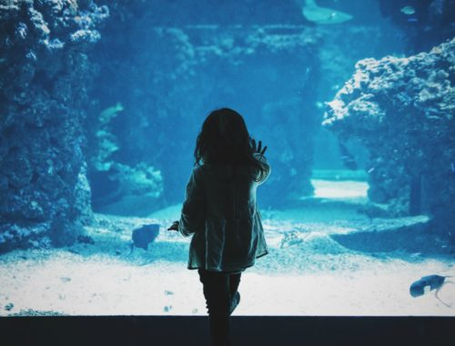 visit oklahoma aquarium jenks | discover tulsa | things to do in tulsa