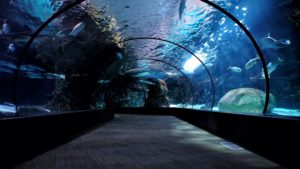 things to do in tulsa | oklahoma aquarium visitors guide jenks