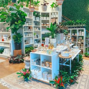 Spotlight Business | The Succulent Shop